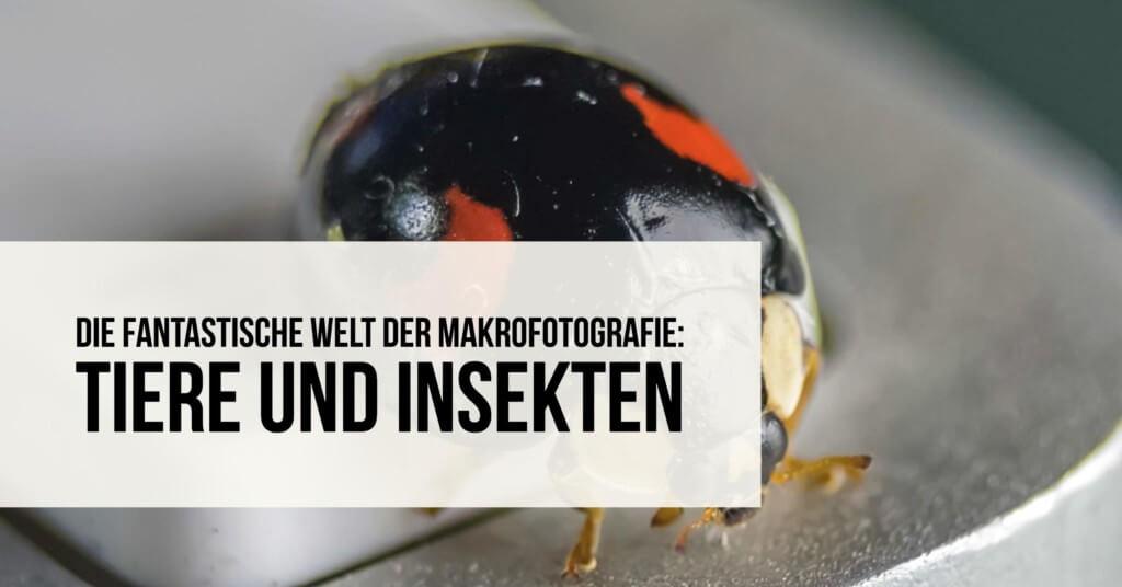 Die fantastische Welt der Makrofotografie: Tiere und Insekten