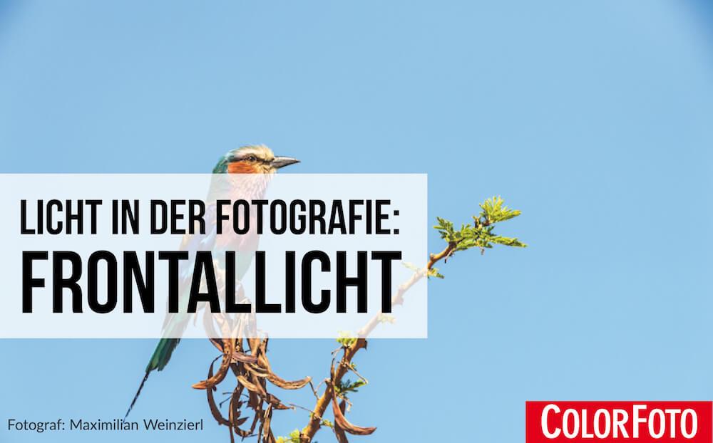 Licht in der Fotografie: Frontallicht