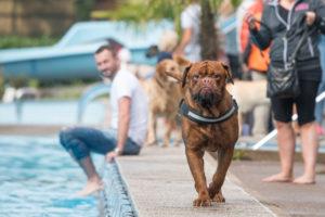 Hund am Beckenrand
