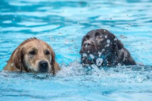 Hunde im Becken