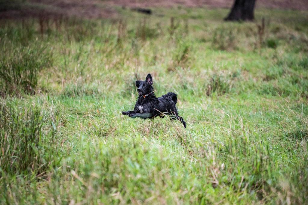 Sicherheit - Hier in den Rheinauen gibt es außer anderen Hunden nichts zu befürchten. Nikon D810 | SIGMA 180mm f/2.8 | 1/3.200 | f/5.6| ISO 1.250 |