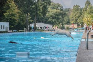 schwimmende Hunde