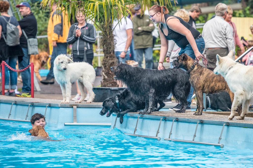 Spaß! Hier beim erwähnten Hundeschwimmen. Nikon D810 | SIGMA 100-400mm f/6,3 | 1/2.000 | f/6.3| ISO 1.000 |