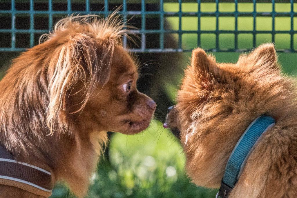 Hundewiese - Viele Motivmöglichkeiten alleine schon durch die Vielzahl an Hunden. Nikon D810 | SIGMA 100 - 400mm f/5.0-6.3 | 1/4.000 | f/6.7| ISO 2.800 |