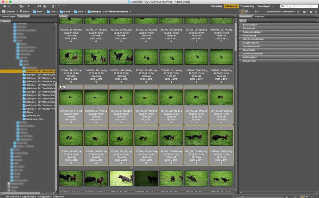 Auswahl der optisch ähnlichen Fotos in der Bridge.