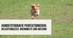 Hundefotografie perfektionieren – Belichtungszeit Brennweite und Abstand