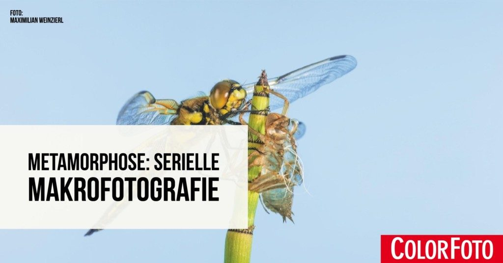 Metamorphose: Serielle Makrofotografie