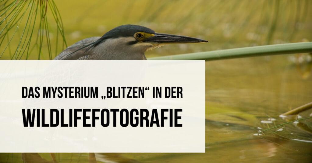 Das Mysterium Blitzen in der Wildlifefotografie Teaser