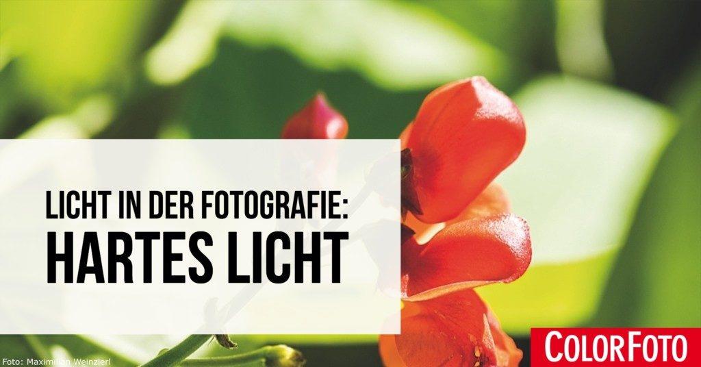 Licht in der Fotografie: Hartes Licht