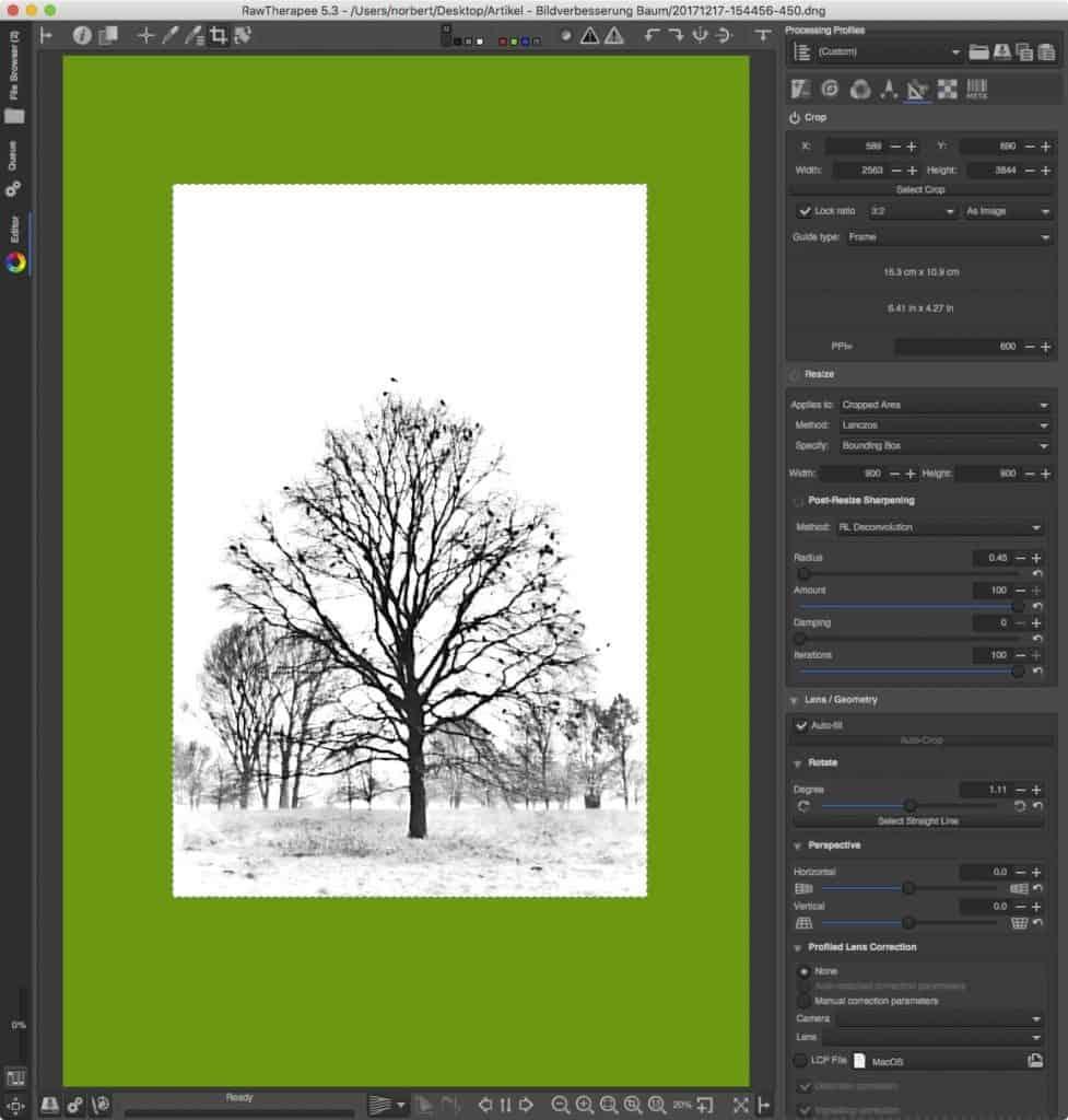 Mit wenigen Anpassungen zum besseren Bild: Mystischer Baum