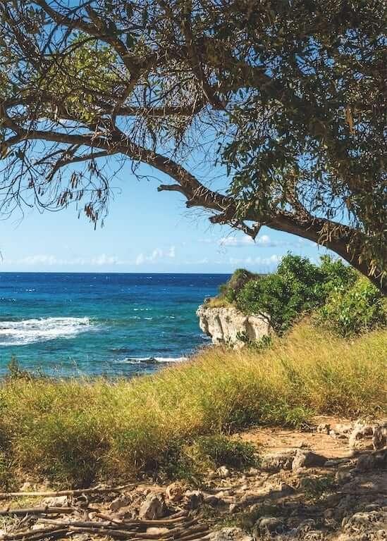 Karibische Küstenansicht