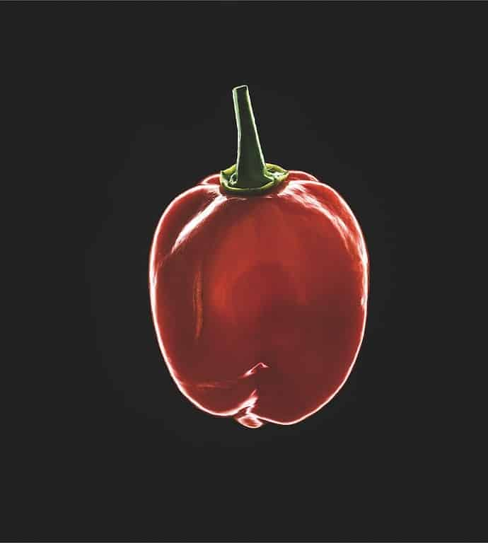 Rote Chili mit Lichtrand