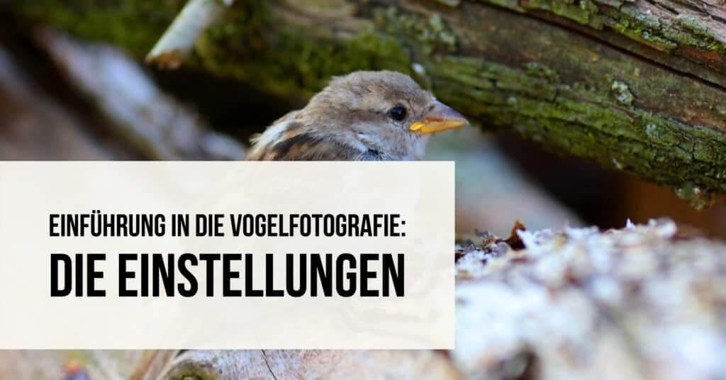 Einführung in die Vogelfotografie: Die Einstellungen