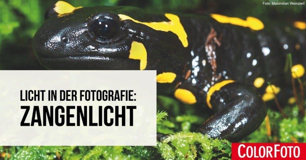 Licht in der Fotografie: Zangenlicht