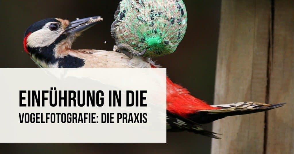 Einführung in die Vogelfotografie: Die Praxis