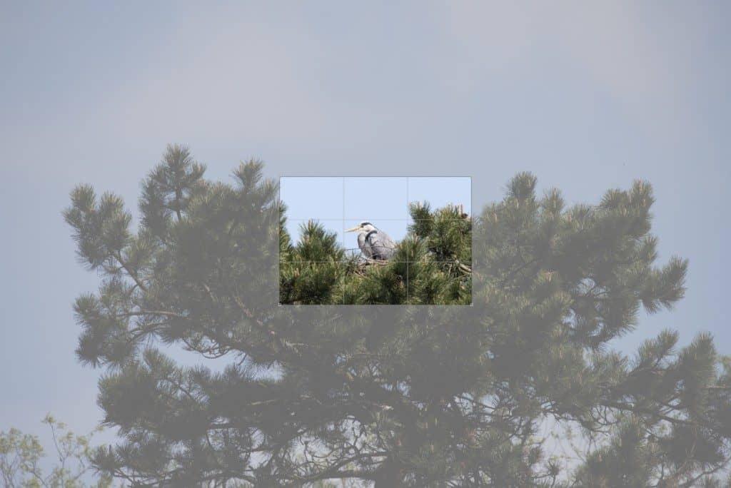 Bildausschnitt im Nest