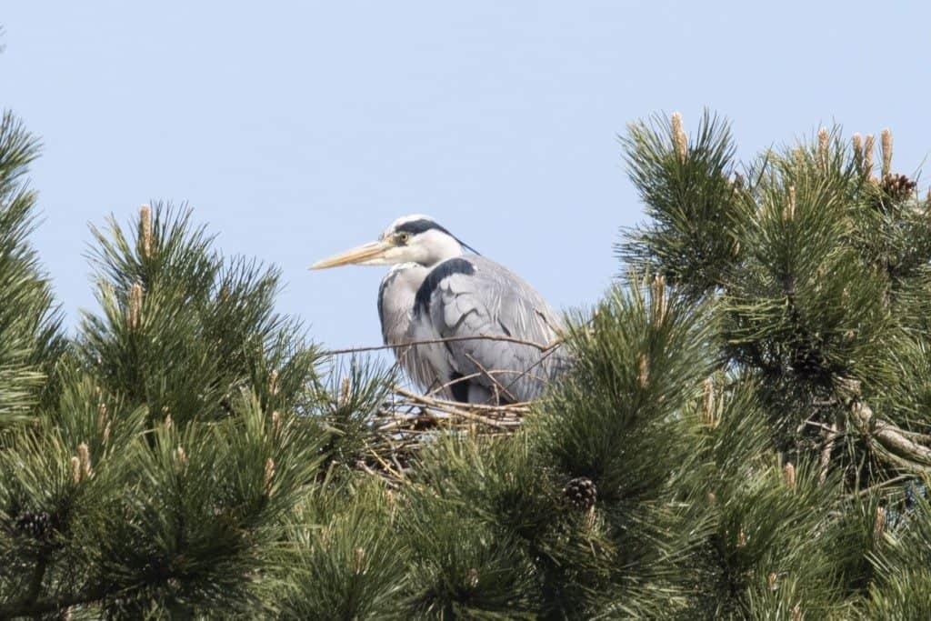Im Nest