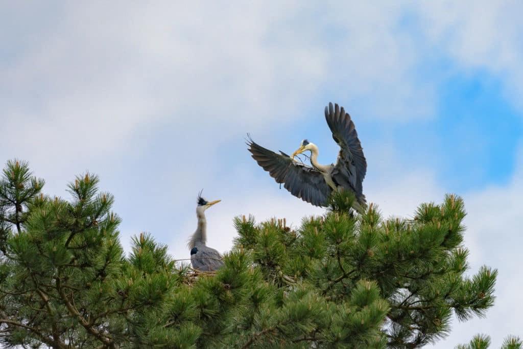Vogel bringt Stoecker