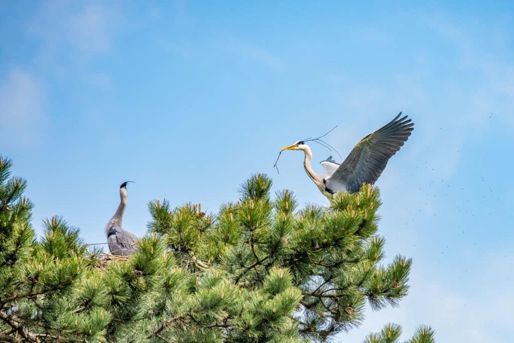 beim Nestbau