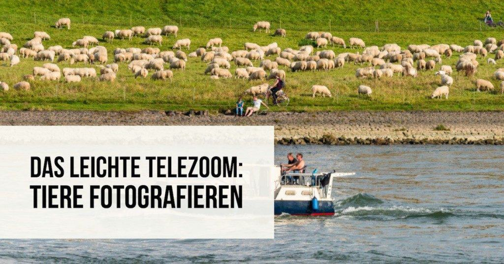 Das leichte Telezoom: Tiere fotografieren