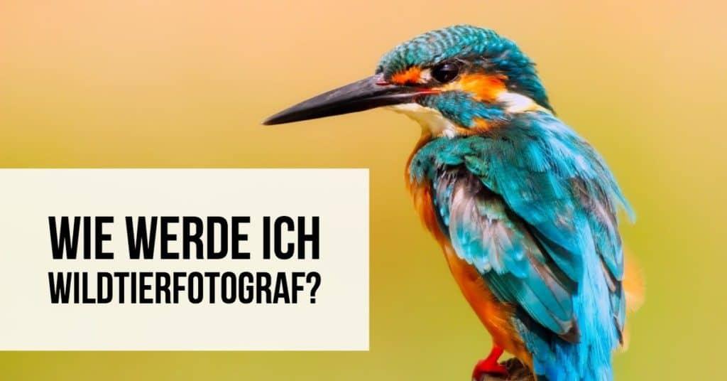 Wie werde ich Wildtierfotograf?