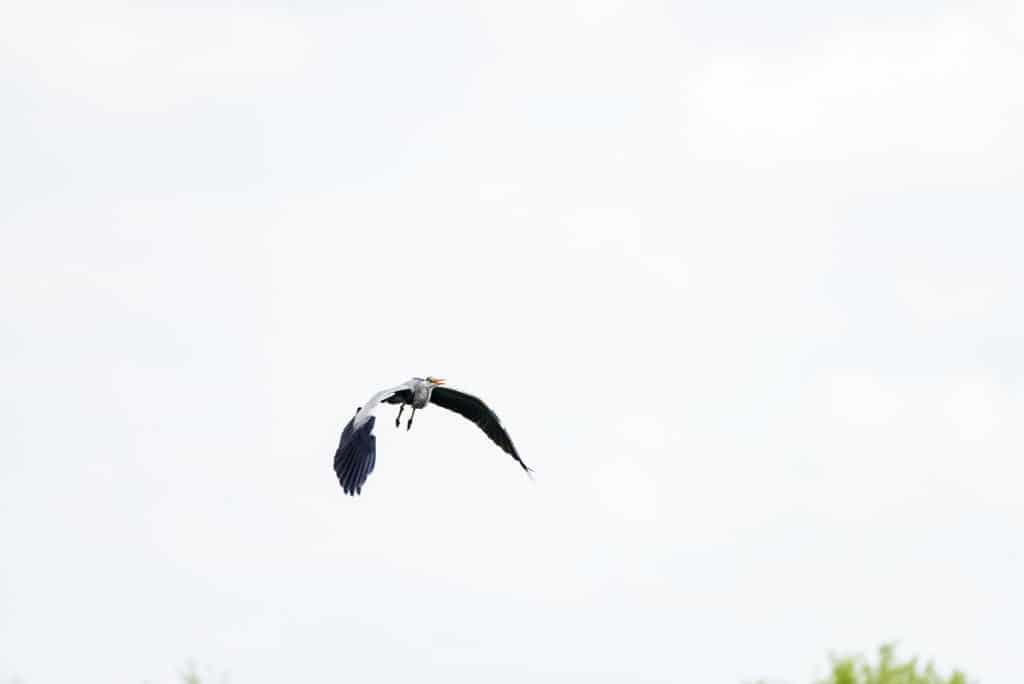 Vogel-im-Flug-2