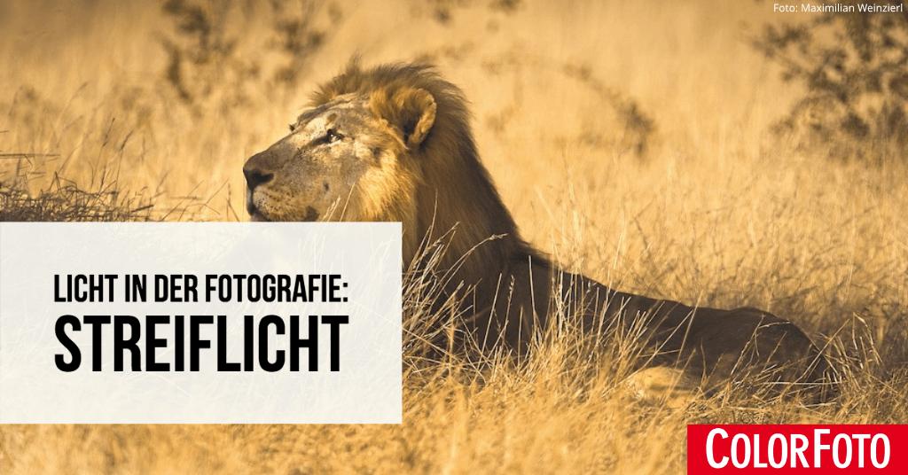 Licht in der Fotografie: Streiflicht