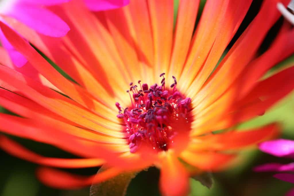 Detail einer Blume, Makroaufnahme (1:1)