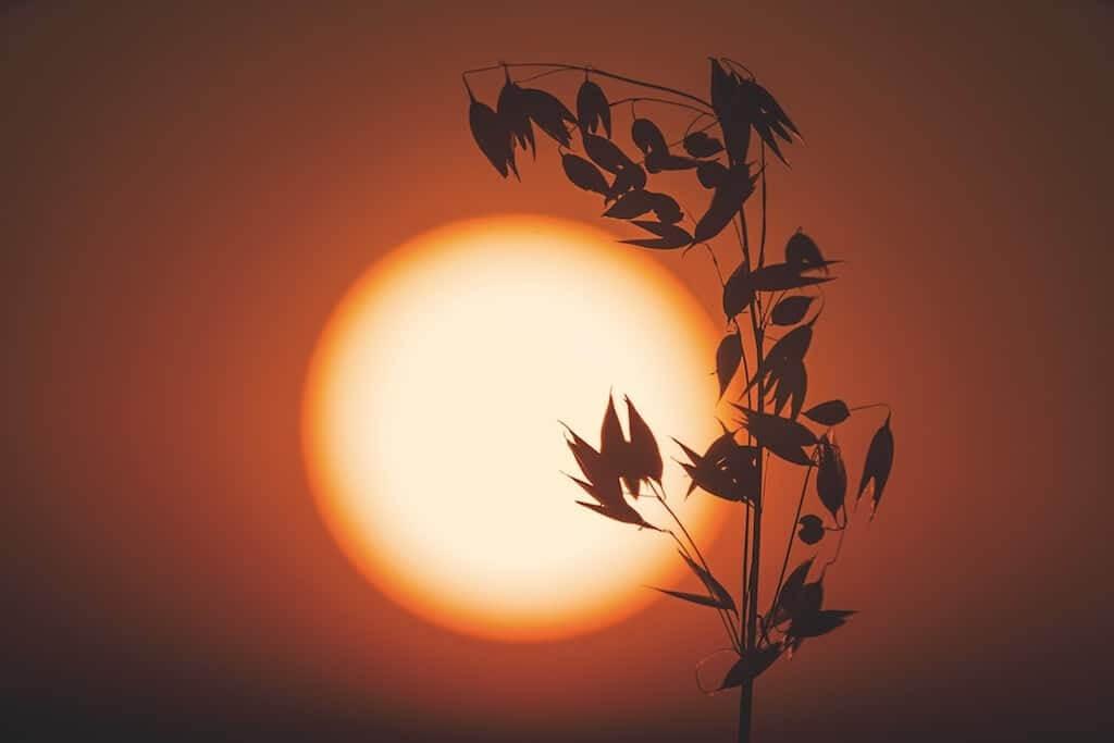 Sonnenabll