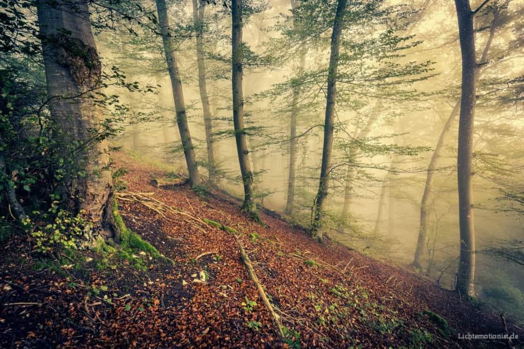 Eindrucksvolle Stimmung am Waldhang.