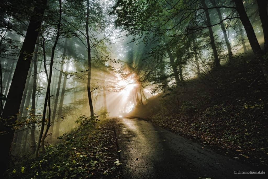 Die Sonne scheint wirkungsvoll durch die Äste auf den Waldweg.
