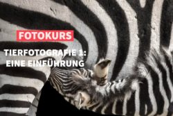 Online-Fotokurs der fotoschule Premium