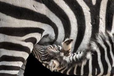 Tierfotografie
