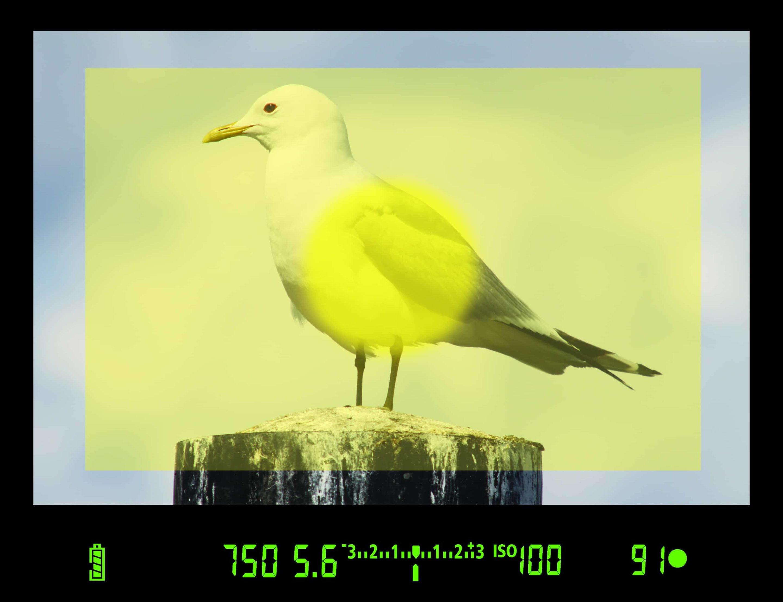 Fotokurs Belichtung - Messmethoden richtig einsetzen