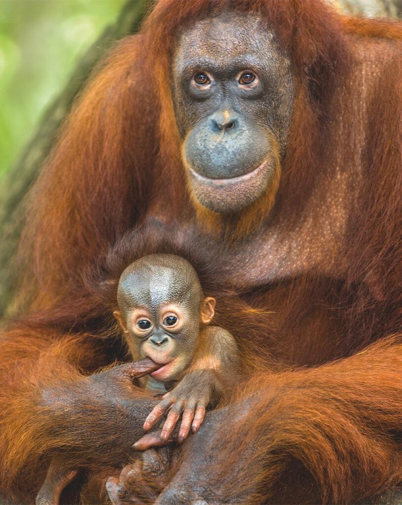 Tierporträt: Affen