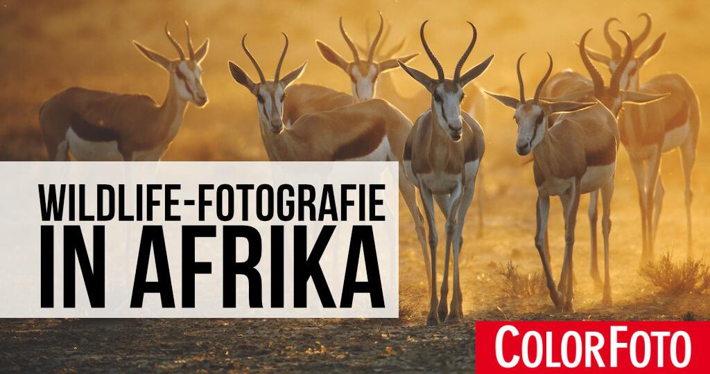Wildlife-Fotografie in Afrika