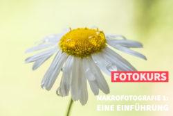 Online-Fotokurs der fotoschule Premium Makrofotografie