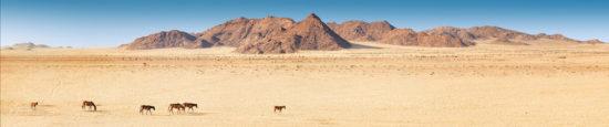 Wüstenpferde von Garub Namibia
