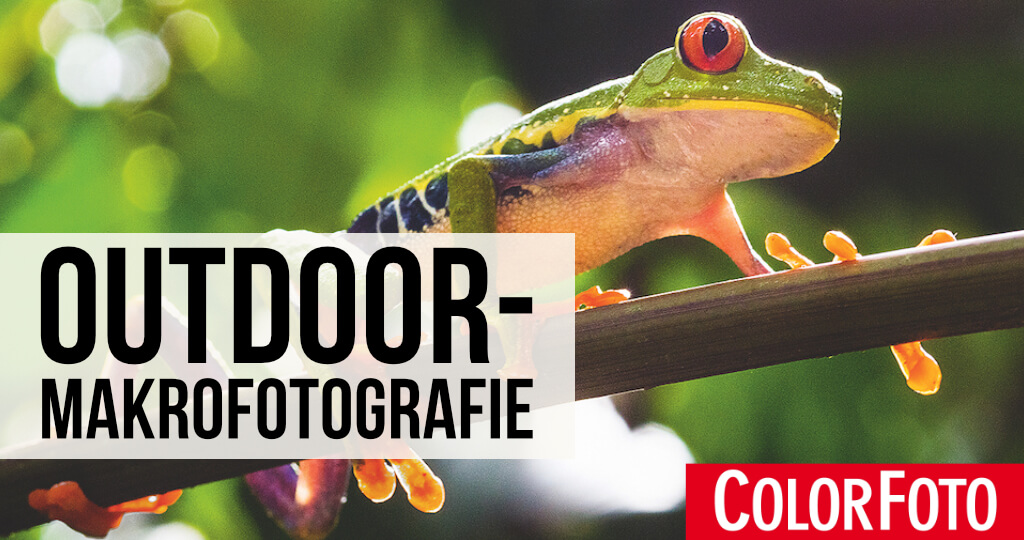Outdoor-Makrofotografie
