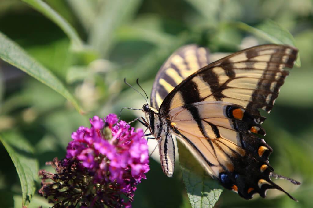 Insektenaufnahmen mit dem Teleobjektiv von SIGMA