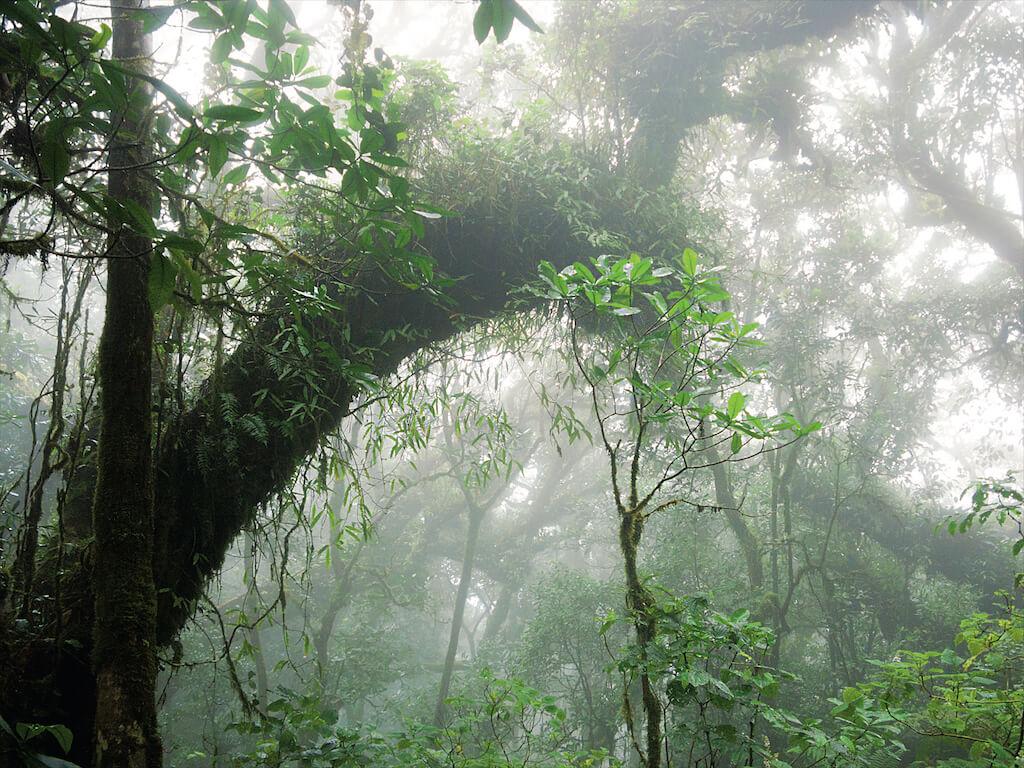 Dschungellandschaft im Nebel