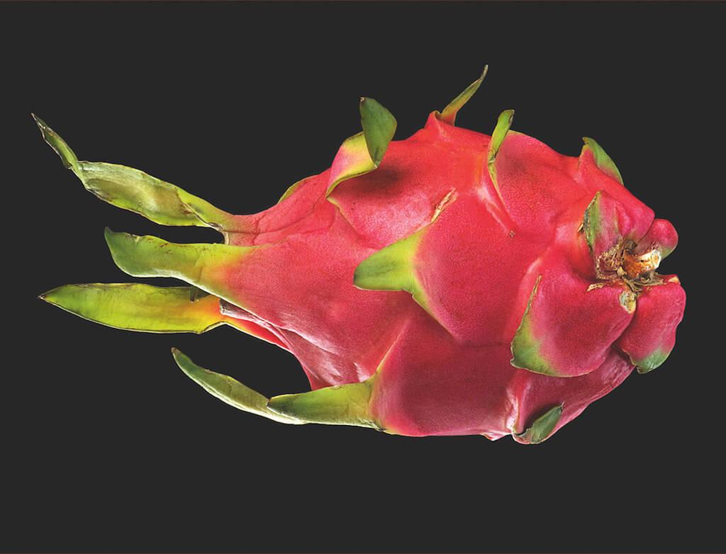 Form und Farbe ist bei Food-Fotografie wichtig