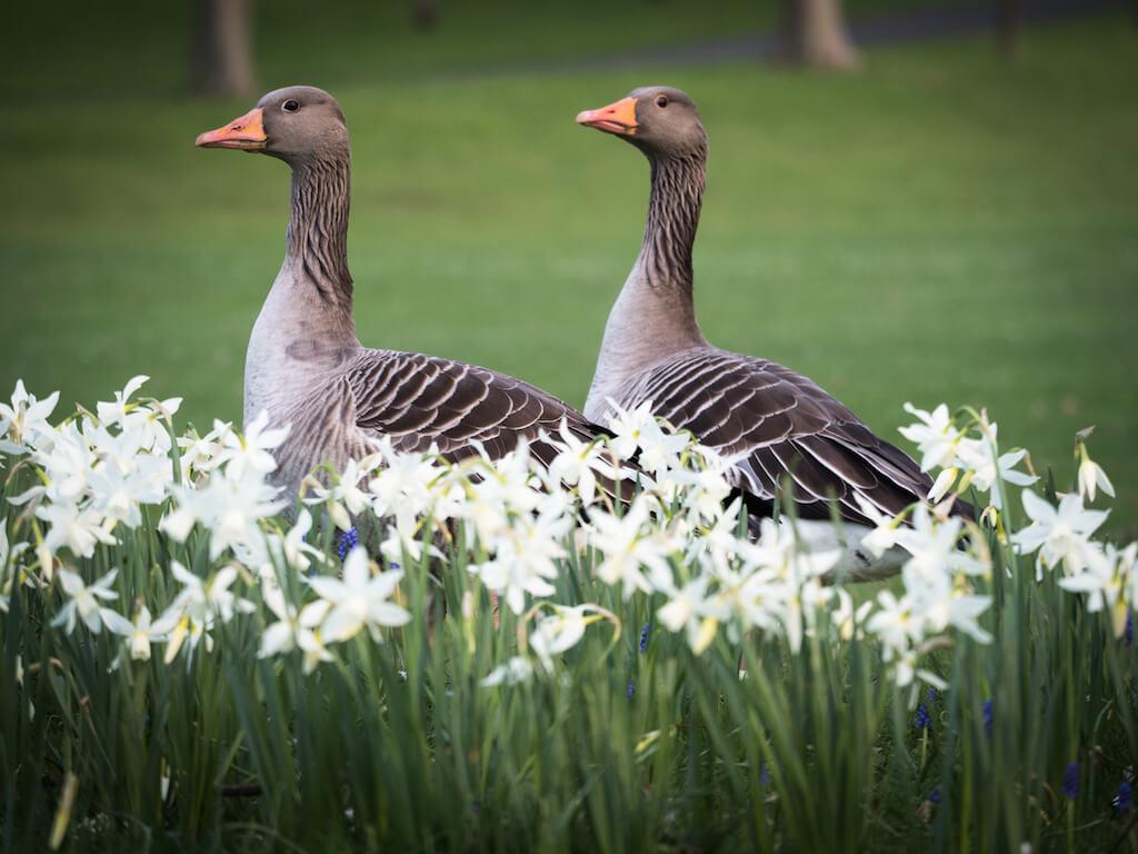 Fotomotive in der Rheinaue in Bonn: Natur und Tiere