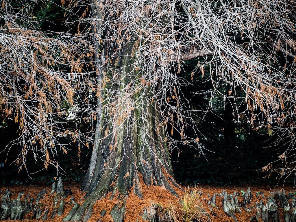 Botanische Gärten in Bonn bieten viele Motive für Naturfotografen an