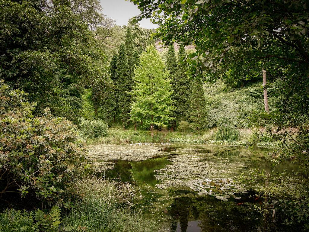 Natur im Arboretum Park Härle in Oberkassel fotografieren