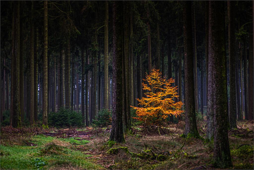 Kontrastreiche Motive in den Wäldern fotografieren