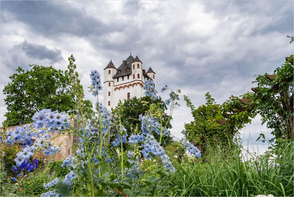 Burg Eltville im Rheingau als Fotomotiv