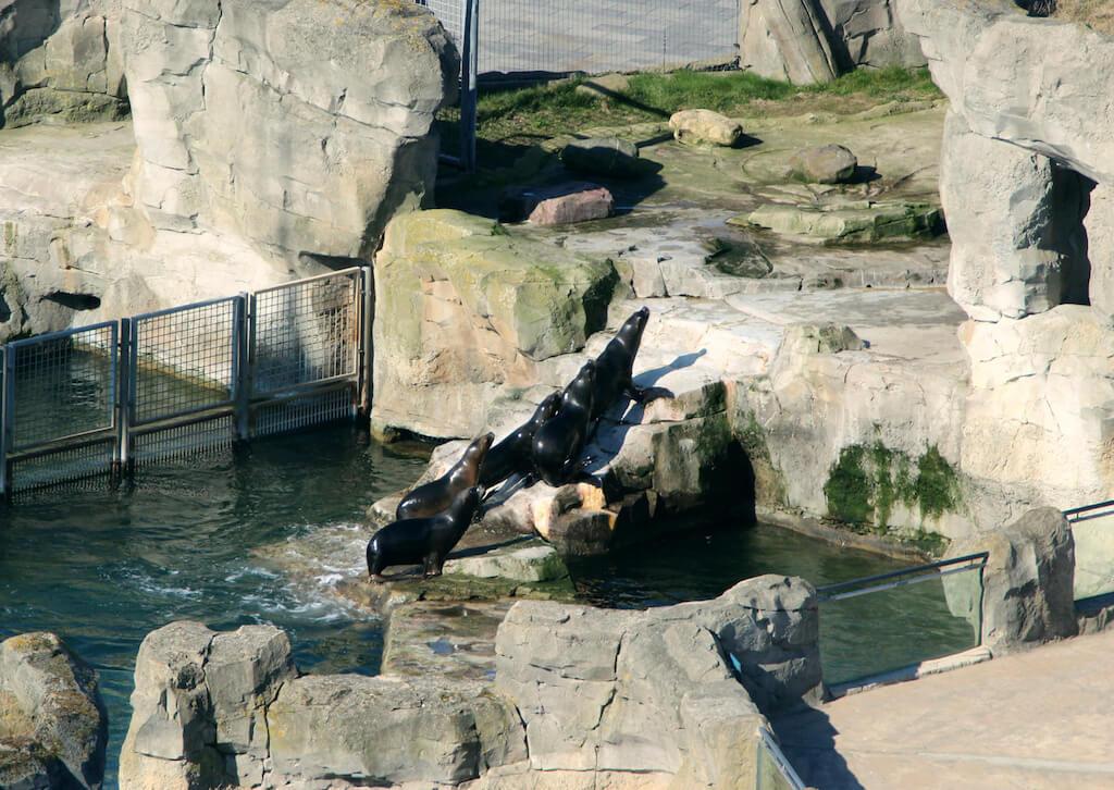 Zoo in Bremerhaven: eine schöne Sehenswürdigkeit