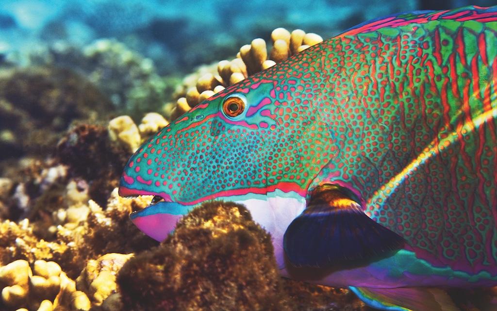 Farbinszenierung unter Wasser