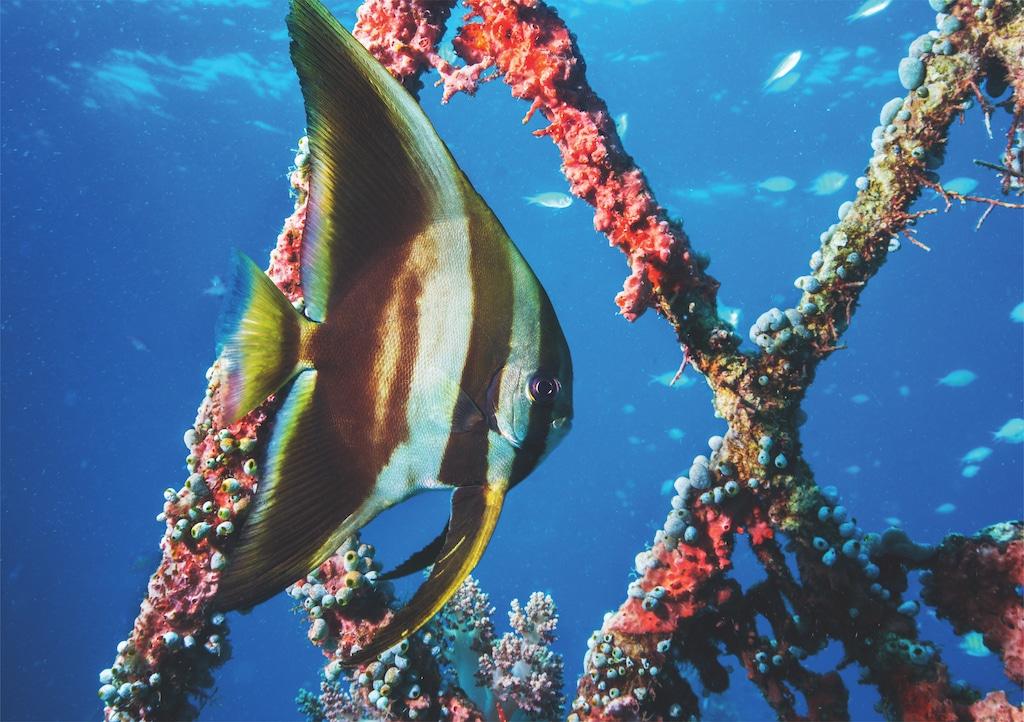 Unterwasserfotografie und die Motive